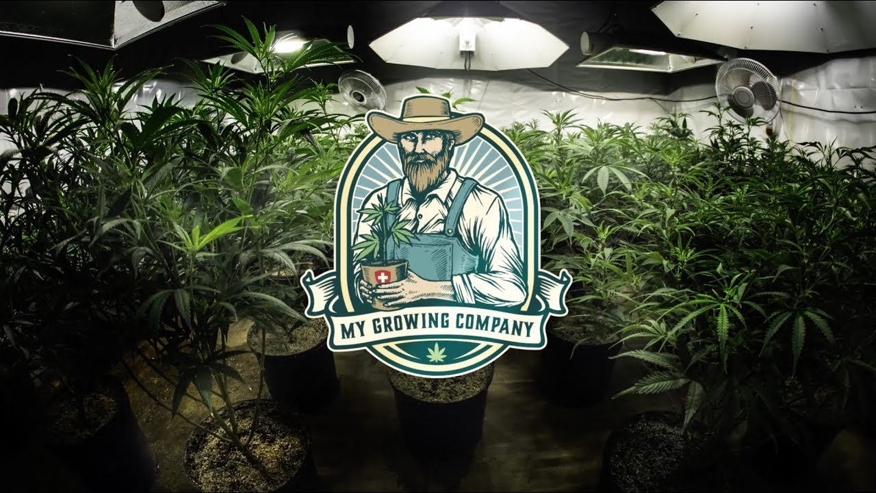 My Growing Company CBD VAPE 4 U