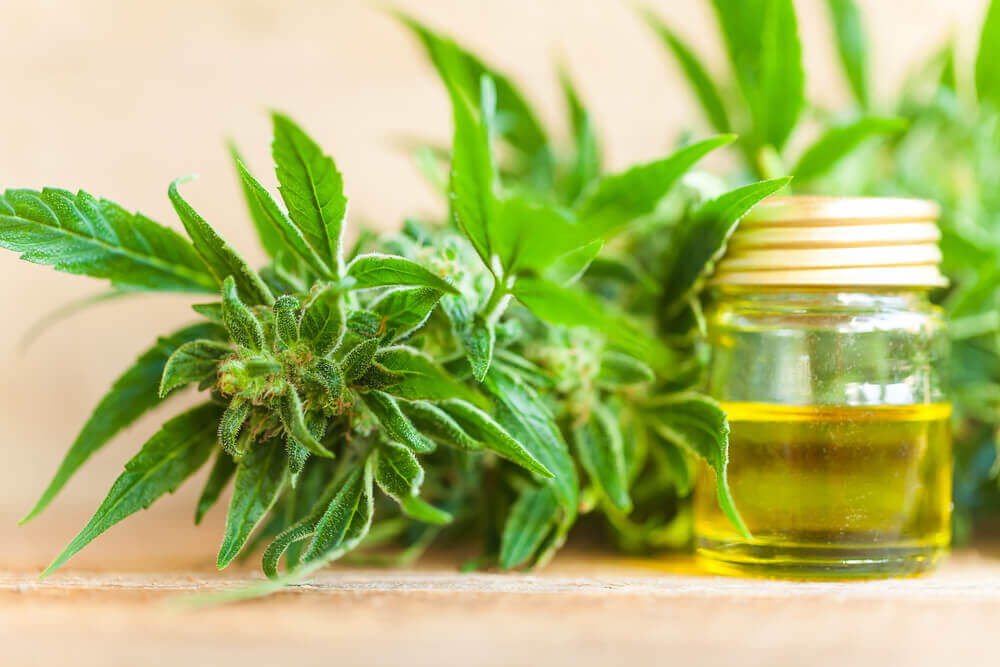 CBD Oil & Hemp Oil