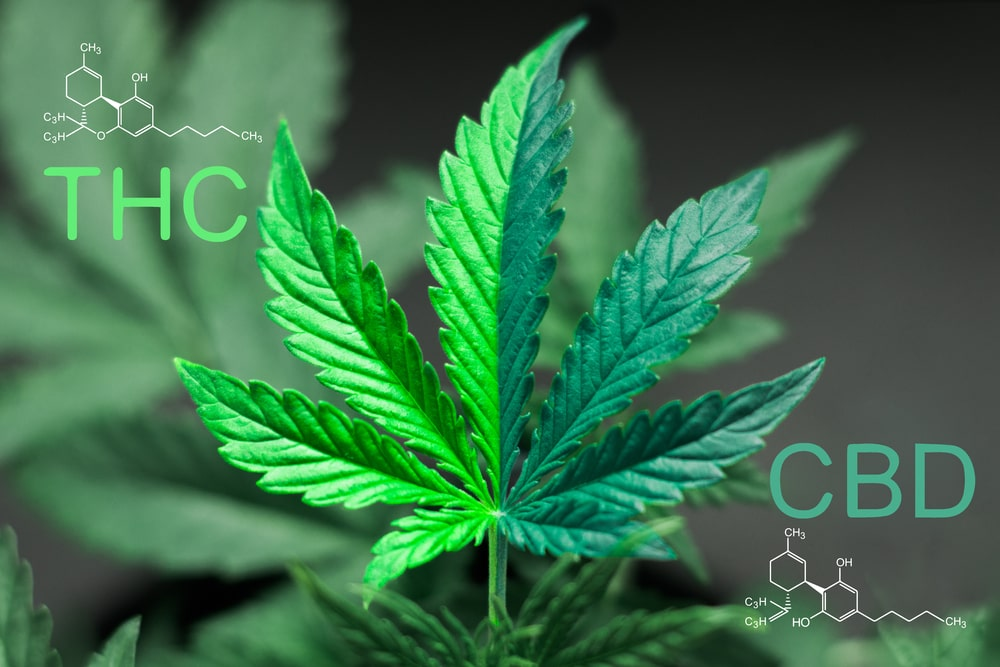 CBD And THC - What's The Difference